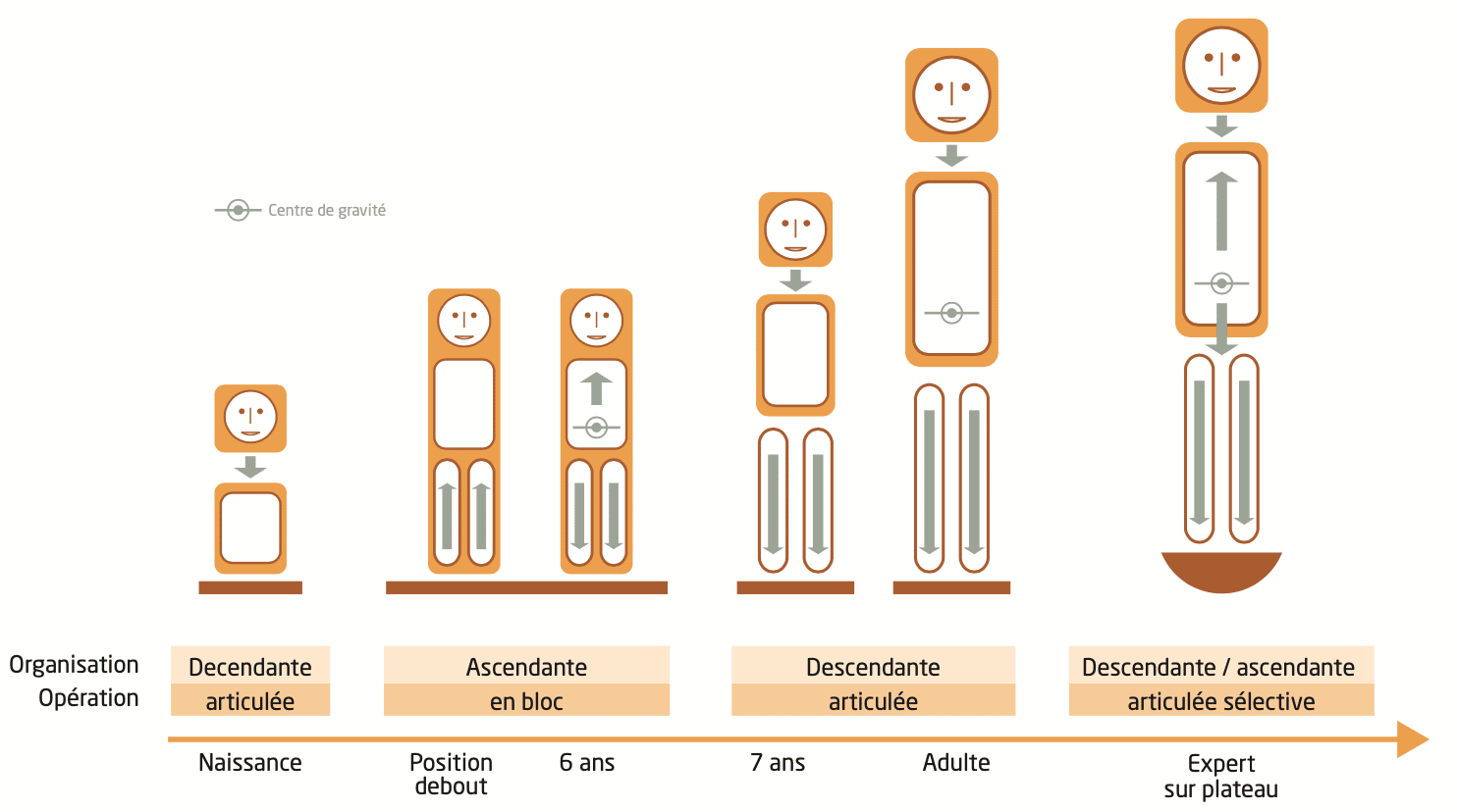 Evolution posturale par classe d'âges