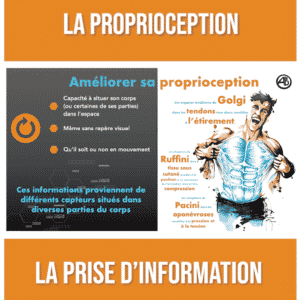 formation proprioception